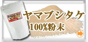 ヤマブシタケ(山伏茸)100%粉末